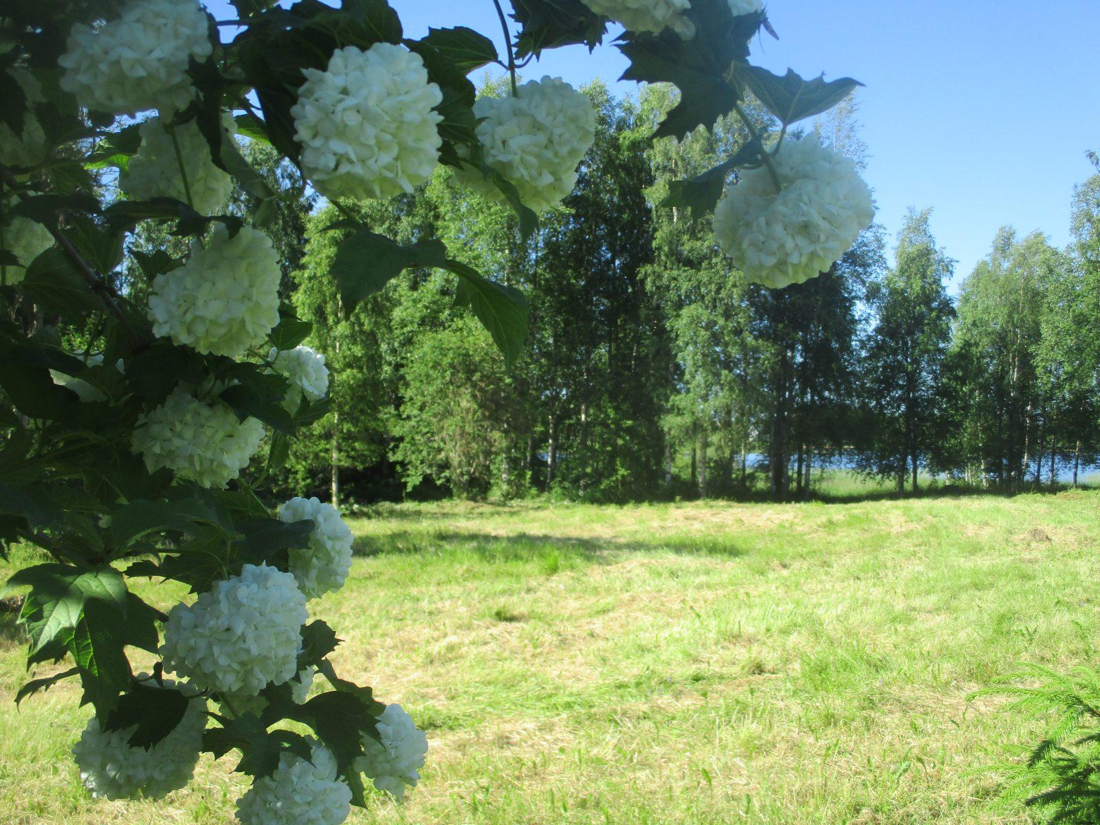 Kesäinen peltomaisema