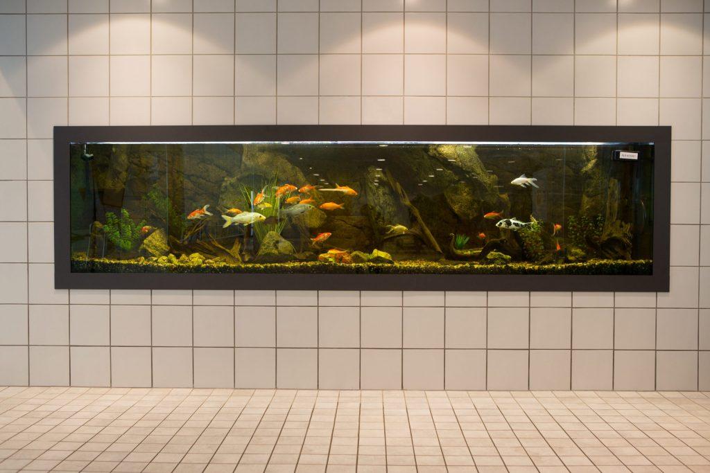 Kaukaveden allastilan seinään upotettu akvaario