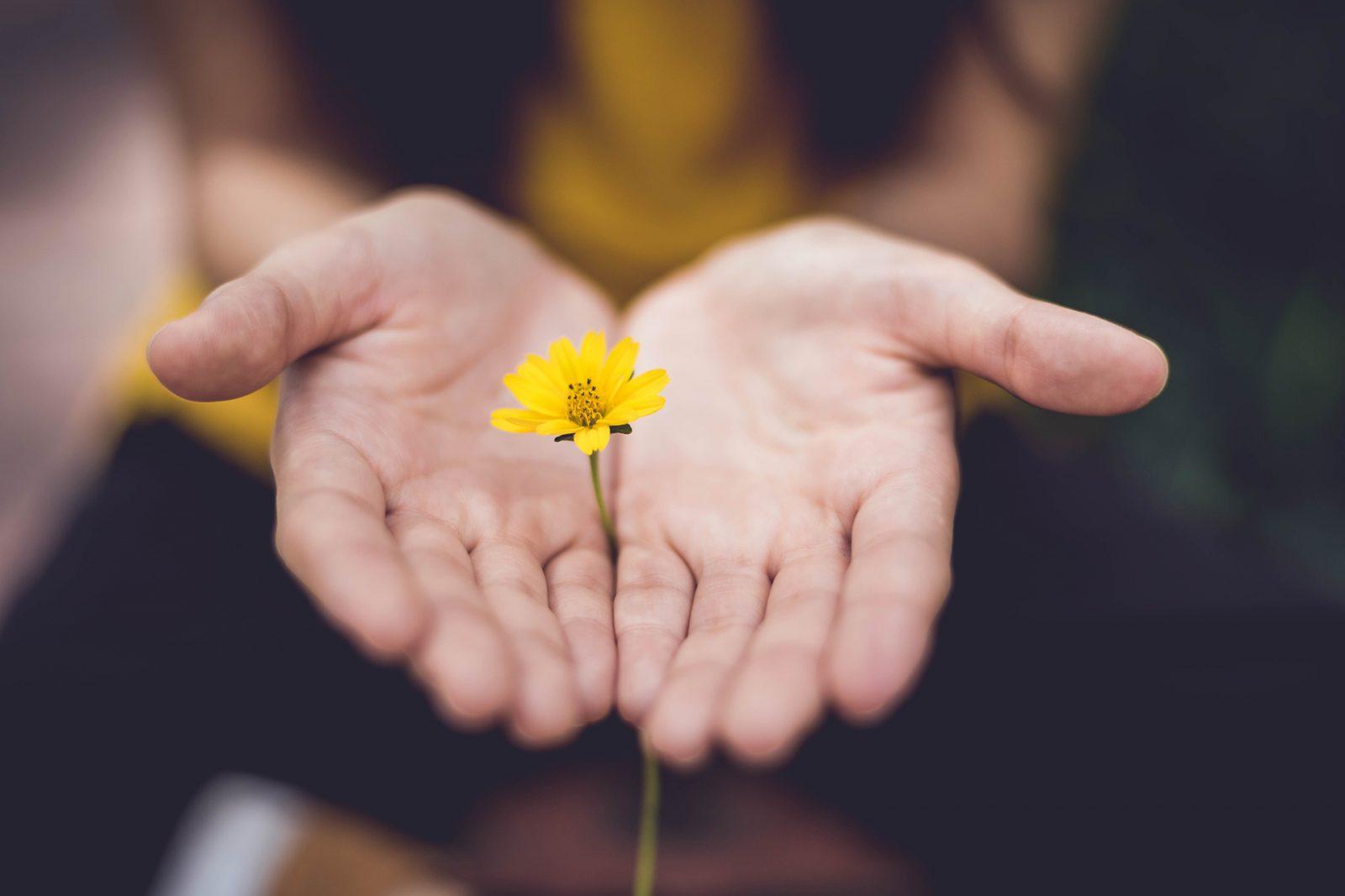 Nainen pitää käsiensä välissä pientä keltaista kukkaa