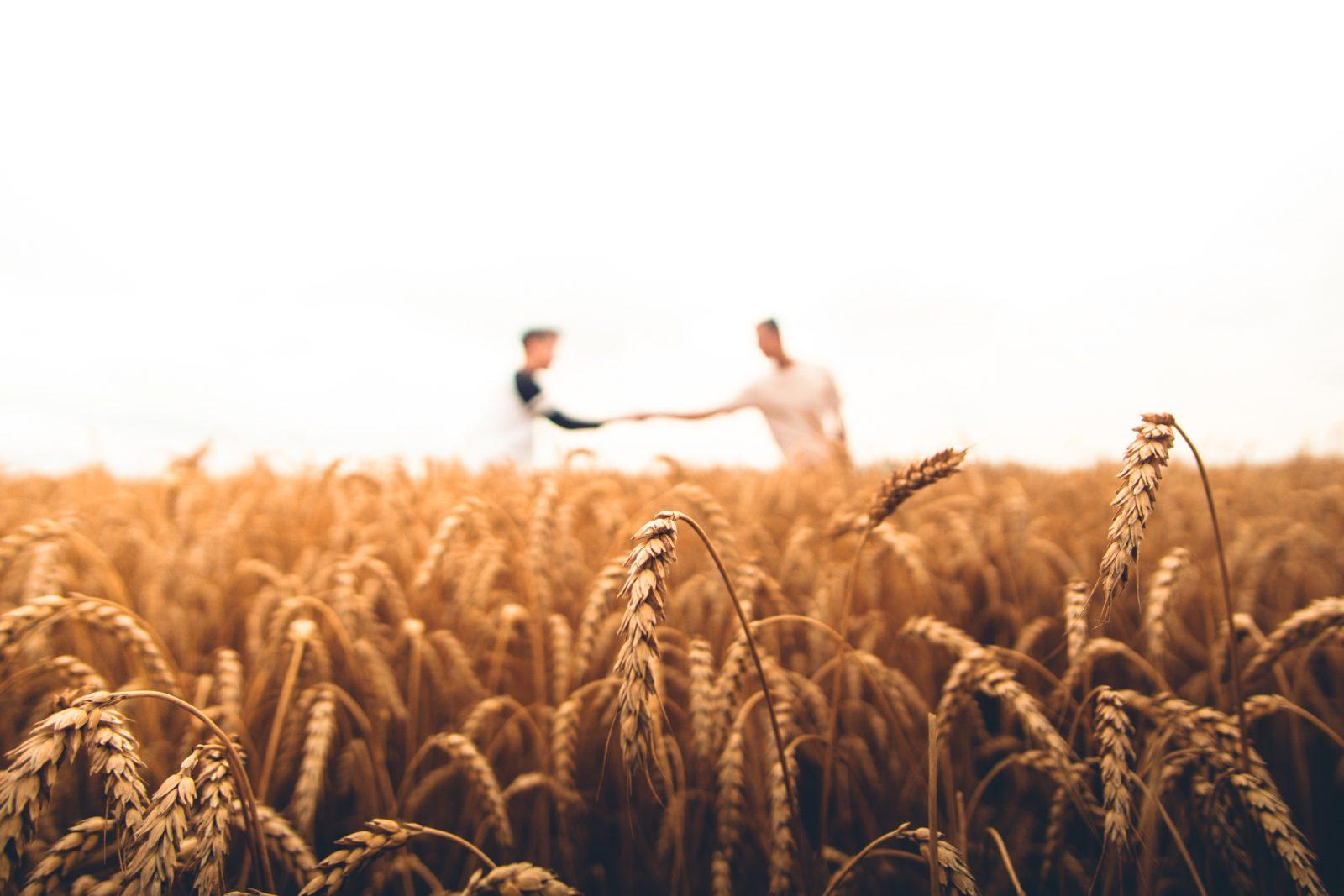 Ihmiset kättelevät kaukana pellolla