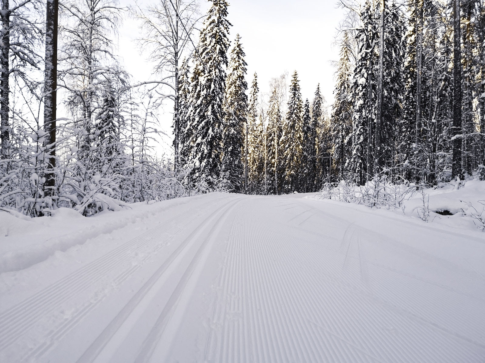 Hiihtolatu ja luminen metsä