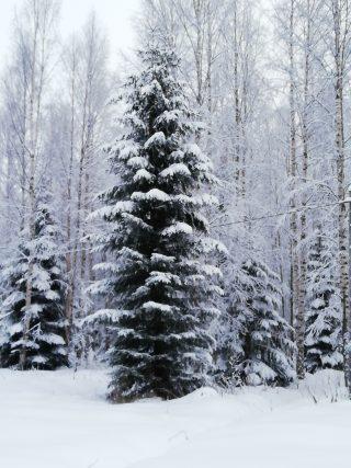 Kerrostunutta lunta