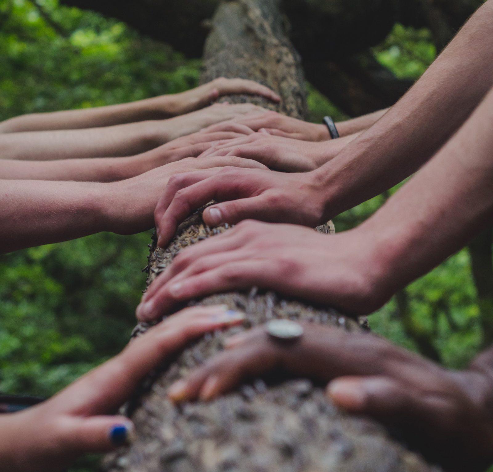 Ihmisten käsiä kaatuneen puun rungolla